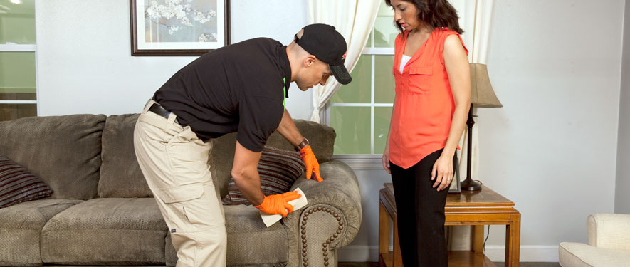Edwardsville, IL carpet upholstery cleaning